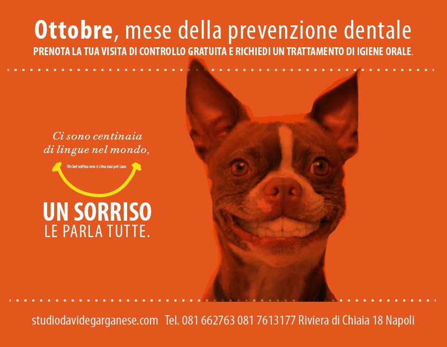 davide ottobre dog